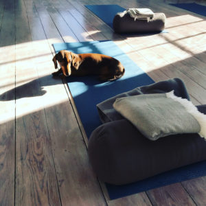 Ready to yoga at YogaSpace Yorkshire